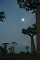Avenue des Baobabs by moonlight