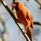 Birds14_Jan14_031_eds
