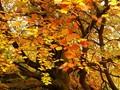 Autumn Show