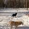 3 snow dogs
