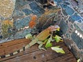 Happy Iguanas, St. Thomas, Virgin Islands