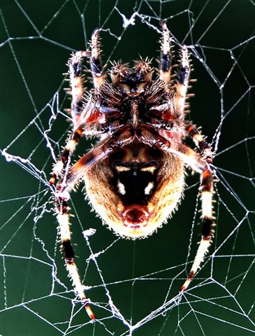 Rear view Spider