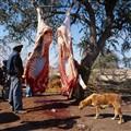 Botswana Field Butcher