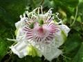 2011-08-28 Punky flower (color)