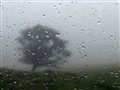 fog_tree_window