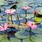 2014-Flor-de-Lotus-DPREVIEW_DSC0466