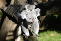 mother Eora and her 7 months old daughter enjoying the autumn sun in the Zoo Duisburg