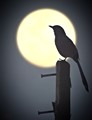 Alone with the Supermoon