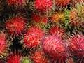 Rambutan - Asian fruit