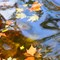 Autumncolors III