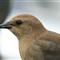 Birdiecropped