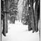 ncc snow silver efx border-