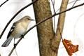 Bird Third