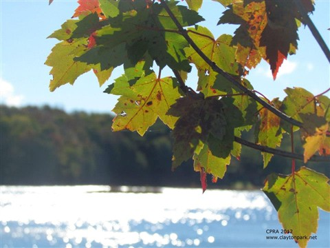Fall Leaves and Lake Henry Diamonds