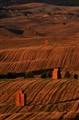 Haymaking - Tuscany