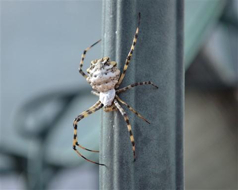 Spider_005