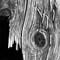 Scheunentor_Detail_05_Retusche_1x1_1000px