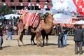 Fethiye Camel Ring