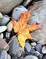 Resting Autumn