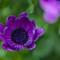 2014_May__17_111342_edited