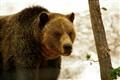 Teddy Bear Hug???