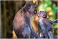 Saw this nice scene of Young Monkey looks for Mom's Love
