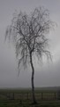 Tree Against a Grey Sky