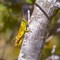 Grasshopper - Kung Fu nickname