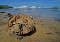The rock on the beach
