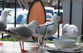 Gull Picnic