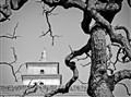 Big Wild Goose Pagoda Xi'an tree BW