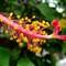 Philippines Flower