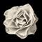 Sepia Rose: