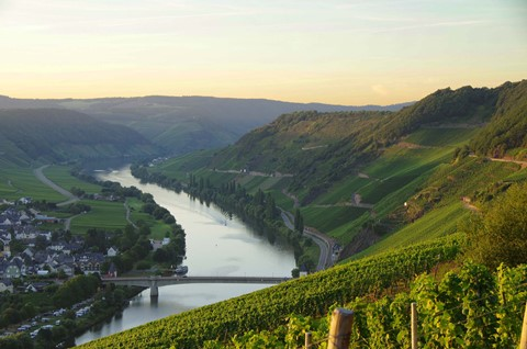 Vineyards at the river Moezel germany