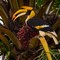 14-Male Great Hornbill Buceros bicornis