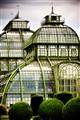 schonbrunn-palm-house