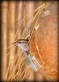 Tiki Nest