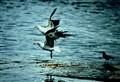 Birds 0381