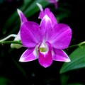 Symmetry of Orchid