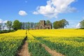 Field of Rapeseed by church
