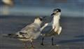 A Very Forward Bird