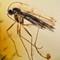 2017 Amber 052 April Diptera Nematocera M Plan 5x