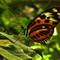 Butterfly nn