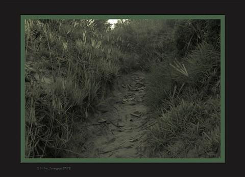 Beach trail (monochrome no_1)
