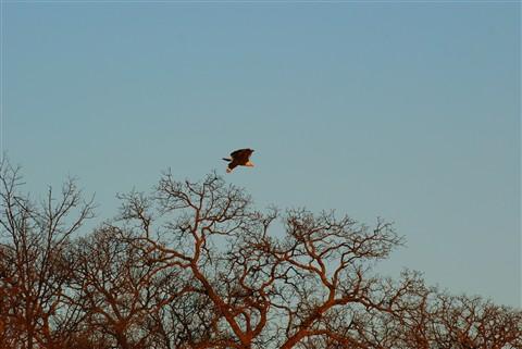 Eaglek2008MDI 034