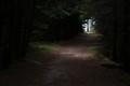 Acadia Trail