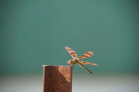 bugres