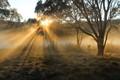 Sunlight through the mist 3