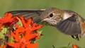Nectar Dancing