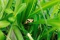 Hidden Frog